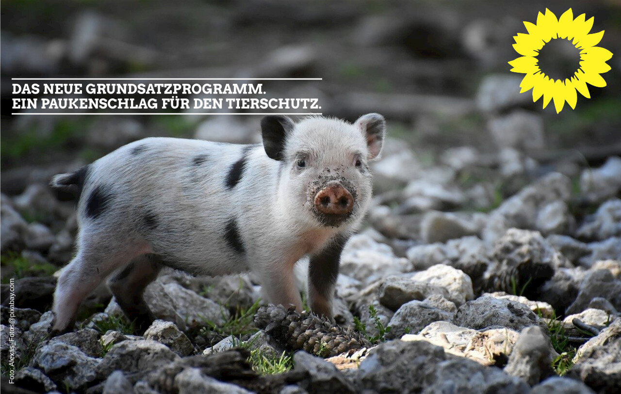 Das neue Grundsatzprogramm – ein Paukenschlag für den Tierschutz.