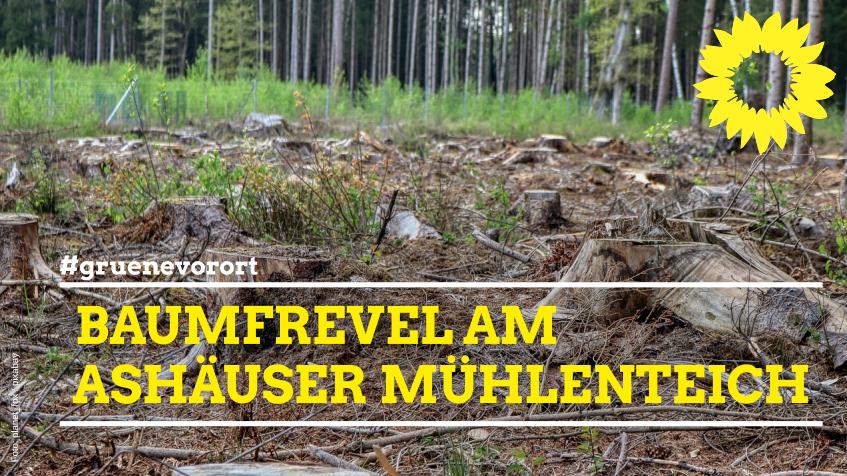 Baumfrevel am Ashäuser Mühlenteich